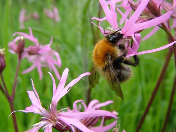 Bumblebee Workshop